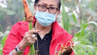 Photo of Puluhan Ribu ASN Pemprov Wajib Serap Hasil Pertanian Lokal
