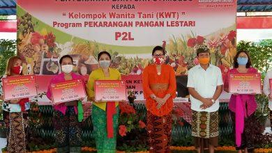 Photo of Ny Putri Suastini Koster Dukung Kelompok Wanita Tani