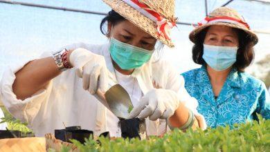 Photo of Kreatif di Masa Pandemi, Ny. Putri Koster Puji IRT Bali