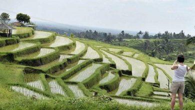 Photo of Bali Sumbang 116 Triliun ke Kas Negara