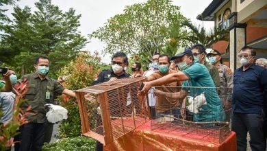 Photo of 14 Jalak Bali Dilepas di Taman Nasional Bali Barat