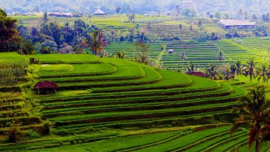 Photo of Baliwood World Content Project Panels, Bangun Ekonomi Bali dari Desa
