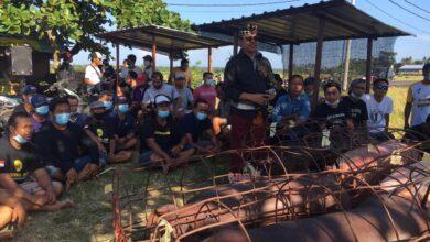 Photo of Suyasa Bupati Badung, Be Celeng Galungan Gratis