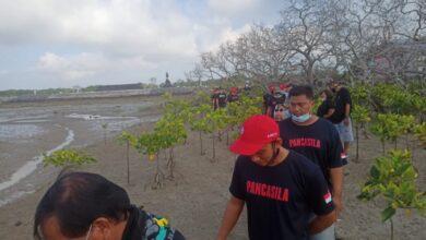 "Photo of Gercin Bali: Matinya ""Mangrove Benoa"" Sebuah Keteledoran"