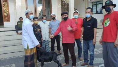 Photo of Idul Adha 1442, Kader PDIP Sumbang Hewan Kurban
