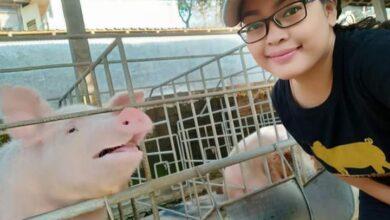 Photo of Pejuang Babi Bali Tegaskan Semua Harus Hidup
