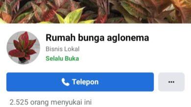 Photo of Pecinta Aglonema Minta Kapolri Tangkap Treni Darwis