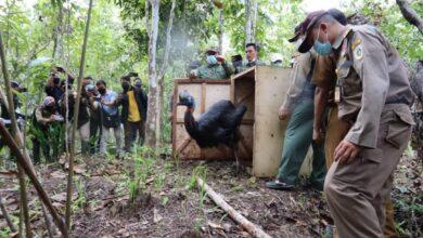 Photo of 12 Satwa Langka Dilepas di Hutan Adat Isyo