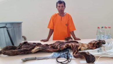 Photo of Pembantai Harimau Sumatera dan Janin Rusa Diciduk